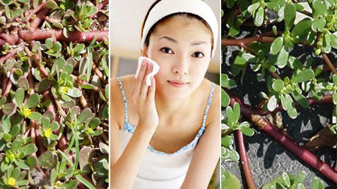 7 Phương thuốc giúp giữ gìn da mặt của danh Y Tuệ Tĩnh 5